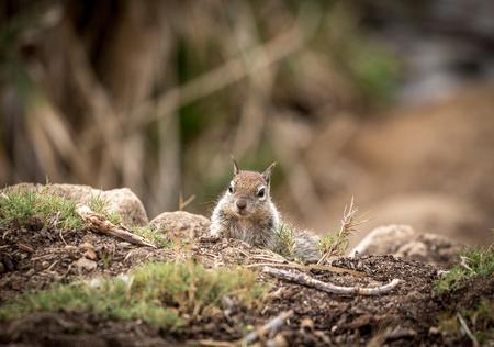 squirrel head shot