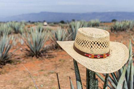 Mexican sombrero on agave. Hat. Sombrero.  Hat on agave. Sombrero on a cactus. Stock Photo