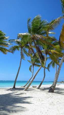 Palm Trees and blue waters in Cap Cana Dominican Republic