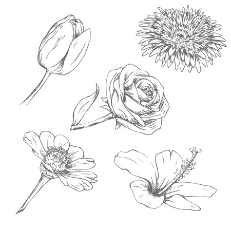 Sets of flower isolated on white background.