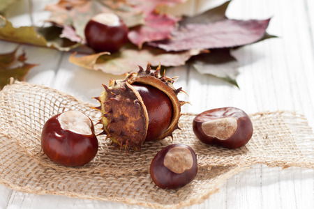 buckeye tree: Autumnal decoration of chestnuts and leaves
