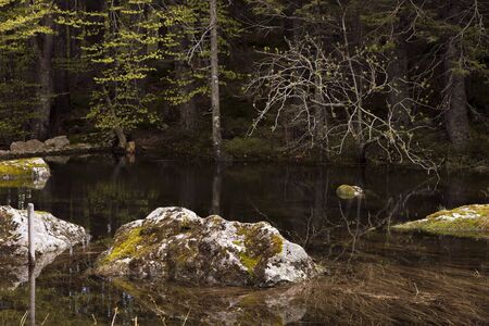 Mossy rocks in a forest lake. Still water, protruding stones overgrown with moss, darkness. Reflections in transparent water. Black Forest, Germany. Natural background. Reklamní fotografie