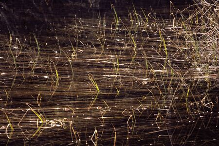 Grass and thickets in water, blades of grass reflections in water. Abstract background. Swamp.