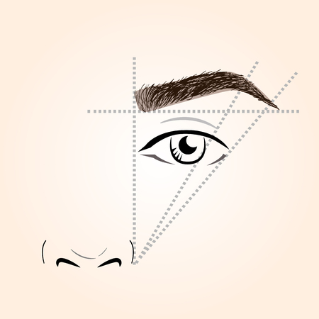 brows: How to paint the eyebrows. Vector trendy makeup brows scheme.