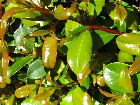 versatile: Green Foliage  Stock Photo