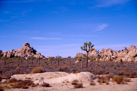 flatland: Joshua Tree National Park is located in south-eastern California