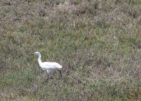 Small heron in Shoreline Park photo