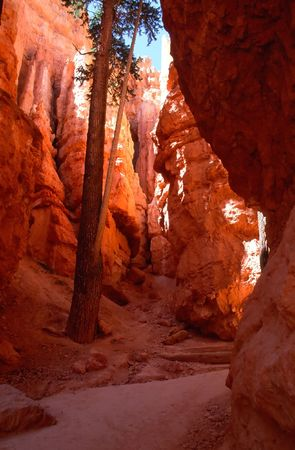 Bryce Canyon National Park is a national park located in southwestern Utah in the United States. photo