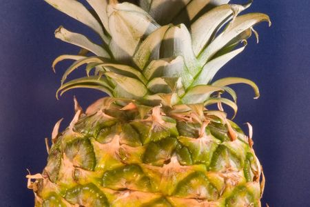The pineapple (Ananas comosus) is a tropical plant and fruit (multiple), native to Uruguay, Brazil, and Paraguay. photo