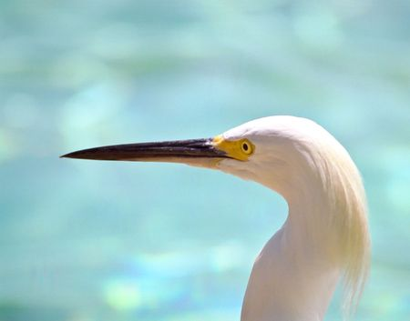 Egret Stock Photo - 2995986