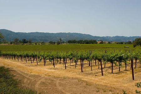 silverado: Napa is the county seat of Napa County, California. Stock Photo