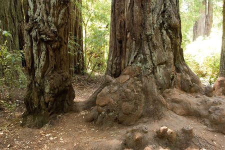 Big Basin Redwoods State Park is a state park in the U.S. state of California Stock Photo - 3105663