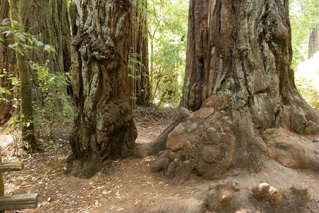 Big Basin Redwoods State Park is a state park in the U.S. state of California Stock Photo - 3105665