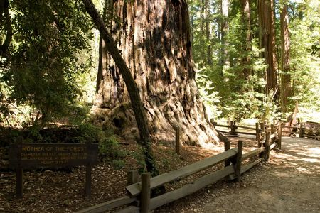 bushwalk: Big Basin Redwoods State Park is a state park in the U.S. state of California Stock Photo