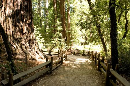 Big Basin Redwoods State Park is a state park in the U.S. state of California Stock Photo - 3105674