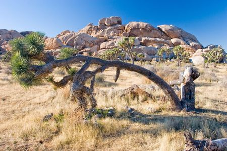southeastern: Joshua Tree National Park is located in south-eastern California.