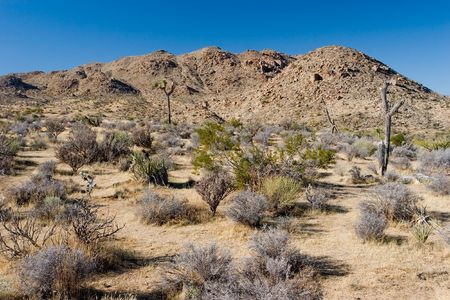 creosote: Joshua Tree National Park is located in south-eastern California.