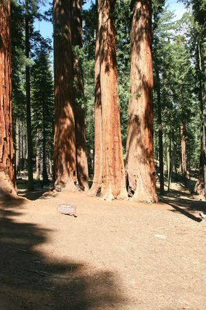 Sequoia National Park is a national park in the southern Sierra Nevada, east of Visalia, California Stock Photo - 3173773