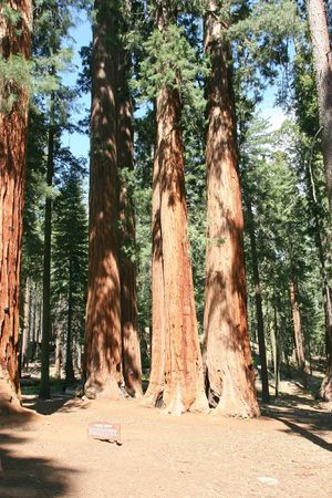 Sequoia National Park is a national park in the southern Sierra Nevada, east of Visalia, California Stock Photo - 3173779
