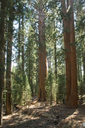 Sequoia National Park is a national park in the southern Sierra Nevada, east of Visalia, California Stock Photo - 3173769