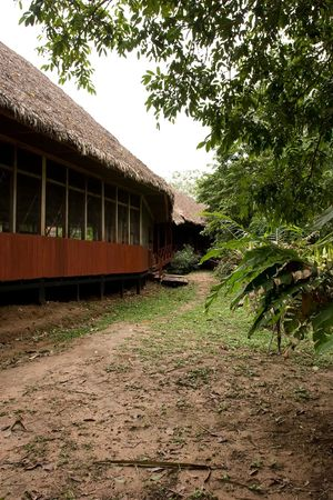 privileged: Located deep in Perus Tambopata National Reserve, our Sandoval Lake lodge overlooks sparkling, palm-rimmed Sandoval Lake, the most beautiful and wildlife-rich of all lakes in Tambopata-Madidi. This privileged location gives you exclusive access to the la Stock Photo