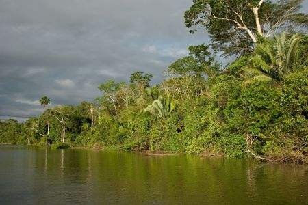 Lake Sandoval is located Tambopata-Candamo which is a nature reserve in the Peruvian Amazon Basin south of the Madre de Dios River Stock Photo - 3272960