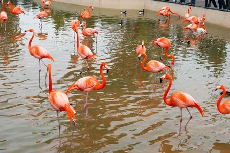 southern europe: The Greater Flamingo (Phoenicopterus roseus) is the most widespread species of the flamingo family. It is found in parts of Africa, southwest Asia, southern Asia and southern Europe