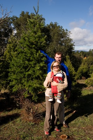 Christmas tree cultivation is an agricultural, forestry, and horticultural occupation which involves growing pine, spruce, and fir trees specifically for use as Christmas trees. photo