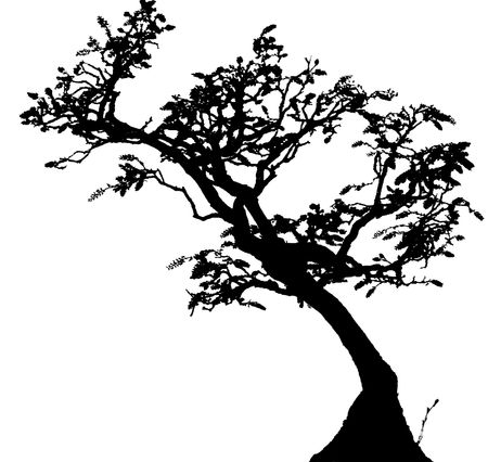 Bonsai is the art of aesthetic miniaturization of trees, or of developing woody or semi-woody plants shaped as trees, by growing them in containers. Cultivation includes techniques for shaping, watering, and repotting in various styles of containers.