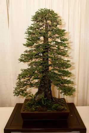 miniaturization: Bonsai is the art of aesthetic miniaturization of trees, or of developing woody or semi-woody plants shaped as trees, by growing them in containers. Cultivation includes techniques for shaping, watering, and repotting in various styles of containers.