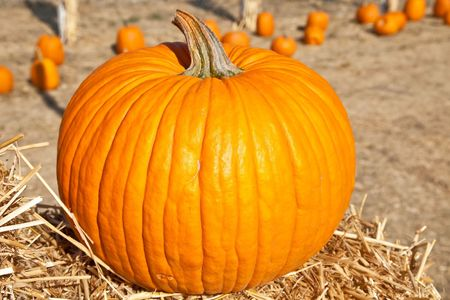 large pumpkin: In the United States, the carved pumpkin was first associated with the harvest season in general, long before it became an emblem of Halloween. Stock Photo
