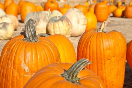 In the United States, the carved pumpkin was first associated with the harvest season in general, long before it became an emblem of Halloween. Zdjęcie Seryjne