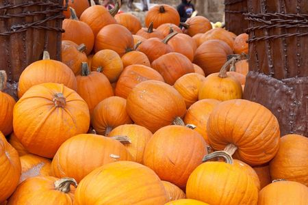 The carving of pumpkins is associated with Halloween in North America where pumpkins are both readily available and much larger- making them easier to carve than turnips.[12] Many families that celebrate Halloween carve a pumpkin into a frightening or com