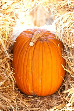 In the United States, the carved pumpkin was first associated with the harvest season in general, long before it became an emblem of Halloween. photo