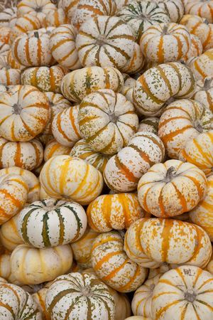 The carving of pumpkins is associated with Halloween in North America where pumpkins are both readily available and much larger- making them easier to carve than turnips.[12] Many families that celebrate Halloween carve a pumpkin into a frightening or com photo