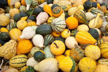 The carving of pumpkins is associated with Halloween in North America where pumpkins are both readily available and much larger