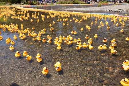 Rubber Duck Race Stock Photos. Royalty Free Rubber Duck Race Images