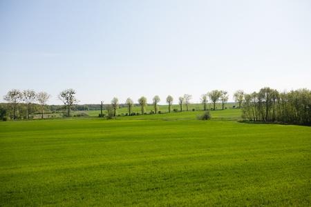 Farmland landscape in Lower Silesia, Poland Stock Photo - 9736080