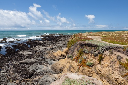 Pacific ocean coast near Pigeon Point Lighthouse. Stock Photo - 10180358
