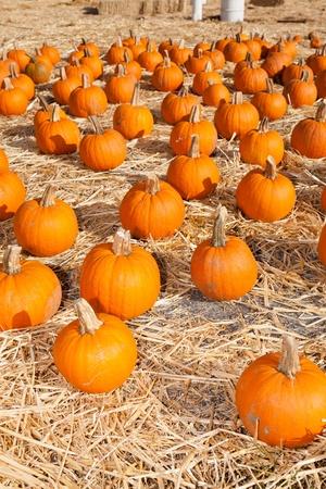 Having fun on pumpkin patch on sunny Sunday. Stock Photo