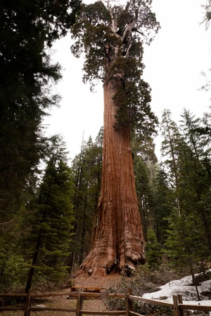 General Grant Grove is a section of Kings Canyon National Park photo