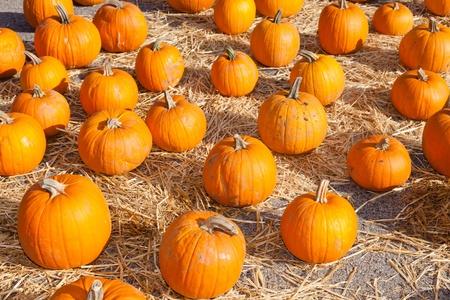 Having fun on pumpkin patch on sunny Sunday. Stock Photo - 13489854