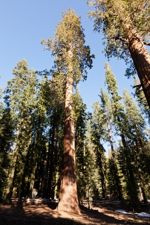 General Sherman Tree trail in Sequoia National Park, California Stock Photo - 13498966