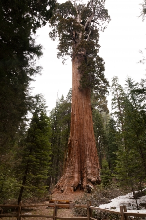 kings canyon national park: General Grant Grove is a section of Kings Canyon National Park