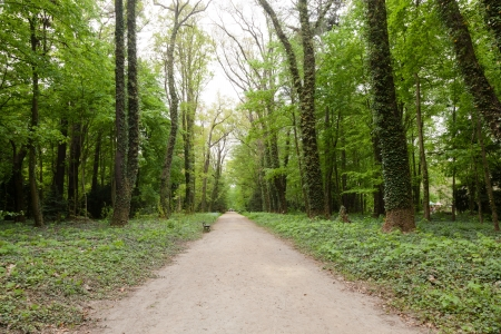 Kornik Arboretum  - the largest and oldest arboretum in Poland. It was founded in the first mid- nineteenth century