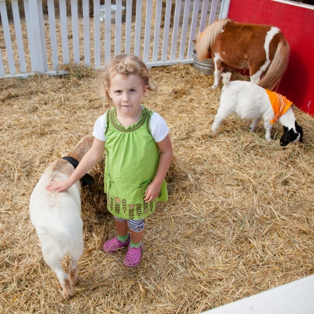 enclosures: Playing with animals in petting zoo on a pumpkin patch.
