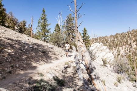 inyo national forest: Ancient Bristlecone Pine Forest es alto en las Monta�as Blancas en el condado de Inyo en el este de California.