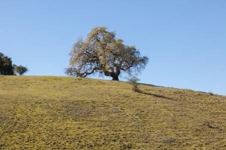 적합: The Stanford Dish loop is a popular route in Palo Alto suitable for running, walking, and hiking.