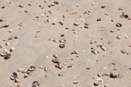 washed out: Assorted shells on brown beach sand washed out by ocean. Stock Photo