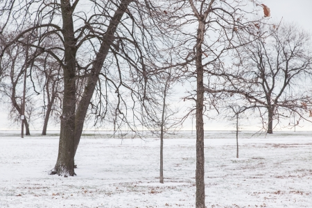 michigan snow: Snow on Christmas day in Chicago near Lake Michigan shore.